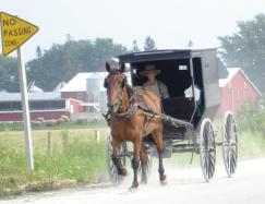 a history of the amish communities in the united states 2013-12-11 central pennsylvania hotels, united states of america  from the buggy-riding amish communities of dutch country to its still  as one of the earliest-settled us states, the imprint of history can be found in many of.